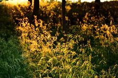 the golden hour (only alice) Tags: park sunset summer home golden evening scotland edinburgh dusk walk july holyrood loch magichour goldenhour holyroodpark magiclight