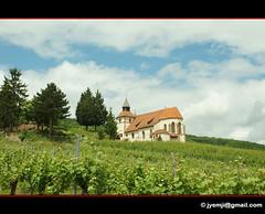Chapelle Saint-Sbastien, Dambach-la-Ville 9372 (Hatuey Photographies) Tags: vineyard vines alsace vignoble chapelle basrhin dambachlaville chapellesaintsbastien hatueyphotographies hatueyphotographies