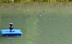 2013_Mecsek_ 403 (emzepe) Tags: lake fish water jump pond hungary surface off fisch hal trout poisson ungarn breaching tó kirándulás forellen mecsek hongrie nyár tábor truite halastó túra 2013 július víz hegység hegymászás péntek pénteki óbánya pisztrángos levegőben mecseki levegőbe vízből kiugrik kiugranak egyházközösségi gyermektábor