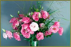 No Roses_wb32_0785 (Aureusbay) Tags: pink flowers germany indoors bouquet mft japanrose eustoma sigma30mm rcflash dmcgx1 ccbysanc