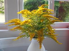 goldenrod looks lovely in a vase