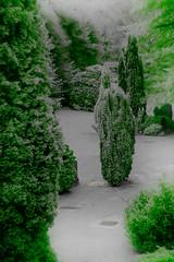 Altenwerder (warden.warden) Tags: friedhof ir hamburg altenwerder infrarot falschfarben