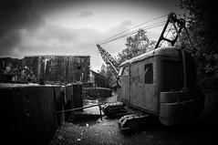 Old Crane (Grue Nordest, 1950)