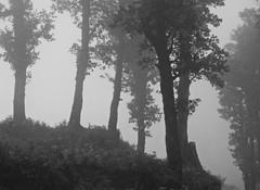 Jalori pass (Sougata2013) Tags: bw india rain forest monsoon mystic himachalpradesh jaloripass kulllu monsooninhimachal serulsarlake
