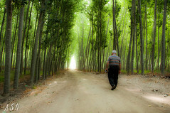 "The light is a trap (Sánchez Huelves) Tags: light people art luz forest nikon árboles solitude bosque soledad d90 theworldwelivein artística ""nikonflickraward"""