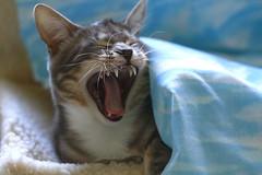 buongiorno.... :-)) (lucia lf@@) Tags: winter italy pet house home animal cat canon eos casa friend foto explorer felino toscana inverno gatto maremma animalidacompagnia