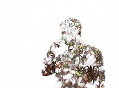 In all chaos there is calculation (Emily Tarkowski) Tags: white silhouette experiment multipleexposure cotton nikond40 emilytarkowski