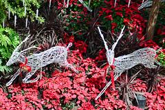Reindeer #2 (chooyutshing) Tags: reindeer singapore display decoration celebrations attractions marinabay baysouth flowerdome gardensbythebay nationalparksboard christmasfestive2013