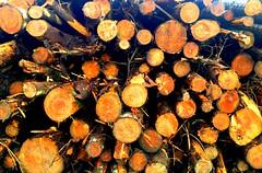 Black Mountain Woodpile #dailyshoot #Wales #iphone (Leshaines123) Tags: light black colour art texture monochrome wales contrast canon photography eos mono photo interestingness artwork flickr foto explore moutains facebook iphone twitter anawesomeshot dazzlingshot vividstriking pinterest leshaines leshaines123 bestofshots