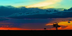 Fire In The Sky (TS446Photo) Tags: africa trip blue red wild cloud sun game tree green nature silhouette set wonder landscape fire drive aperture nikon colours view kenya african reserve explore burn mara nik colourful vulture rise masai afs exodus dx 70200mm d4s d7000 lpsky ts446 vision:sunset=0819 vision:sky=095 vision:clouds=0577 vision:car=0756 vision:outdoor=0622 lpsky2