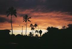 (thaLeafybug) Tags: life winter people food streets film 35mm hawaii kodak live konica jl af portra hexar 160 2014