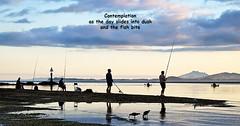 Haiku - Contemplation (Wanda Amos@Old Bar) Tags: haiku poetryandpicturesinternational wandaamos