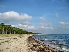 Strandskog - Ystad strand (Flicker Classic Person) Tags: beach strand nude skne sweden nudist naturist sverige safe fkk ystad naken 2013 strandskog