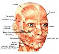 Facial Muscles: Tens (preciouskidsgreatparents) Tags: muscles kids parents paradise outdoor furniture great precious wicker facial tens