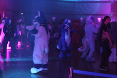 IMG_3702 (Tender Paws UK) Tags: paws tender 2014 cfz confuzzled cfz2014