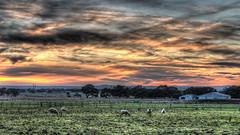 Sunrise (RissaJT_23) Tags: sunrise sheep country australia victoria donnybrook pentaxk50