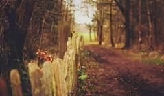 Happy Fence Friday...x (shona.2) Tags: scotland nikon path wood forest hff friday fence