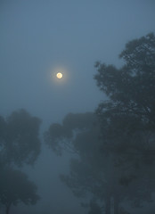Shining Through (gpa.1001) Tags: california lajolla fog moonrise moon