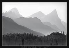 Mistaya River Valley (poltorak.wieslaw2) Tags: canada alberta mountains canadianrockies mountainpass mountainridge nationalpark banffnp summer blackwhite wieslawpoltorak