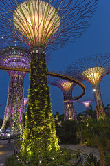 Supertrees // Gardens by the Bay (Merlijn Hoek) Tags: trip vacation gardens night photography vakantie nikon singapore asia fotografie nacht emirates april trips holliday d800 azie nachtfotografie loopbrug vacantie hollidays azi merlijn hoek lichten gardensbythebay merlijnhoek supertrees ocbcskyway