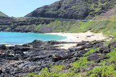 IMG_1773 (cheryl's pix) Tags: beach hawaii oahu makapuubeachpark makapuubeach