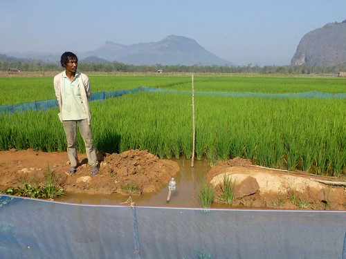 A farmer stands by his integrated rice-fish farm in Laos. Photo by Jharendu Pant, 2013