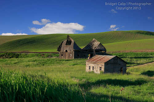 Collapsed Barn in the Green Hills of the Palouse Country