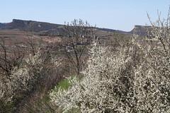 Les 2 roches jumelles (Chemose) Tags: spring burgundy bourgogne printemps solutré vergisson