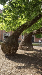 Tornado pod (Mark and Rebecca Ford Art Sculpture) Tags: sculpture spiral haywardsheath twist slide exhibition willow hazel installation woven tornado commission artsfestival spyro coppice ardingly ardinglycollege