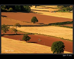 Chequered Ploughing. (Picture post.) Tags: trees sunlight green nature landscape countryside interestingness farmland diagonal fields tractors paysage arbre plough chequered platinumheartaward