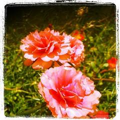 การปลูกต้นไม้ทำให้จิตใจฉันสงบ#มีสมาธิ#รอบคอบ#และจากสิ่งนี้เองทำให้ฉันเข้าใจความหมายของคำว่าปากหวานก้นเปรี้ยวจากการนั่งปลูกดอกไม้เงียบๆ#มันทะลุเข้าไปถึงก้นบึ้งของหัวใจเลยว่าคนที่พูดจาดีๆกับเราแต่กับคิดกับเราอีกแบบหนึ่งผ่านทางมือถือที่ชีคุยกับปลายสาย.....ลึ