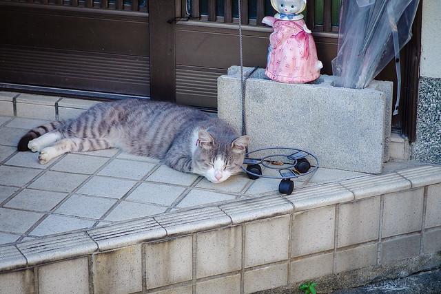 Today's Cat@2013-09-29