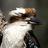 David Cook Wildlife Photography icon