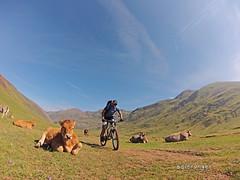 Vacas en Aguas Tuertas