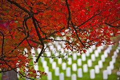 Red & Green (Ausamah) Tags: autumn trees red orange woman usa man sexy green art fall nature beautiful cemetery graveyard leaves yellow sex stone infantry arlington dead soldier photography death virginia photo dc washington bahrain amazing nice war branch colours peace force gulf place purple head military air rip headstone tomb tombstone navy arab fallen seals rest marines resting martyr airforce veteran officer    ausamah alabsi