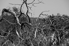 Jalapo (32) (Raphael R. Pais) Tags: wild camp tree nature landscape natureza dry safari cerrado rvore savanna palmas tocantins jalapo korubo