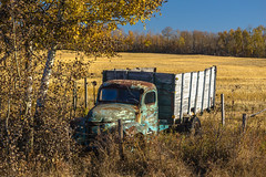 Rusting relic (perspective 1) (Martin Thielmann) Tags: ab barbedwirefence antiquetruck harvestedfield derelicttruck strathconaco latefallcolours rusticinternationaltruckwithwoodplanksides