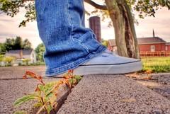 IMG_2854.JPG (Jamie Smed) Tags: blue trees tree geotagged shoe shoes sneakers sneaker vans geotag hdr app 2010 offthewall otw handyphoto iphoneedit snapseed