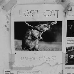 Lost Cat (kzhk.noir) Tags: street 35mm photography photo nikon singapore g adventure f18 dx pagar tanjong d90 explor