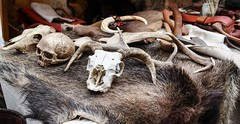 Jorvik Viking Festival 2014 - Coppergate (3) (nican45) Tags: york camp slr festival canon fur market yorkshire sigma axe material bone february feb dslr viking 1770 jorvik 2014 600d coppergate 1770mm eos600d 1770mmf284dcmacro