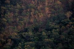 Muthathi (Jnarin) Tags: trees nature forest landscape outdoors bangalore fulllength karnataka muthathi colorimage kanakpura kanakpuraroad focusonforeground aroundbangalore treecover canonef100400mmf4556lusmis niranjvaidyanathan canoneos5dmarkiii