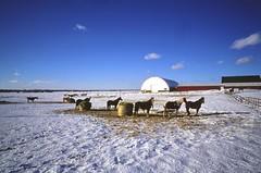 Winter Residence (karstenphoto) Tags: blue winter horses zeiss rural lens skies fuji angle michigan farm wide ishootfilm contax velvia fujifilm g2 50 f28 21mm biogon filmisnotdead ishootfujifilm
