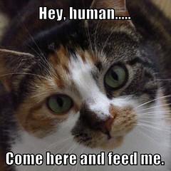 Cat Meme (Bouzz) Tags: pet cats face animal writing cat word words feline text meme stuff memes