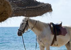 Sea Horse (Patrick Costello) Tags: sea horse beach umbrella hotel tunisia hammamet nabeul riupalace