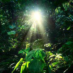 Letting light through. (Simon Matzinger) Tags: life wood sun green leaves forest ecuador napo