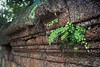 Banteay Srei - Nature Creeping In (Drriss & Marrionn) Tags: travel cambodia southeastasia shiva stonecarvings hindutemple banteaysrei archeologicalsite khmerart citadelofwomen