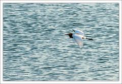 Jhansi, Uttar Pradesh (Arif Siddiqui) Tags: india tourism birds landscape asia dam places rivers arif uttarpradesh jhansi bundelkhand siddiqui pahuj