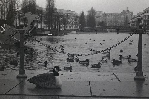 Vogelhafen