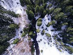 be mine (Philipp Sarmiento) Tags: travel philipp sarmiento photographer explorer canon 5d mark3 dji phantom 3 landscape drohne forest arbersee bavaria regensburg