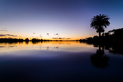 Long Lake Sunset (ajecaldwell11) Tags: trees palm newzealand ankh dusk water hamilton sky lakerotoroa innescommon caldwell clouds light